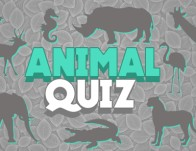 Play Animal Quiz
